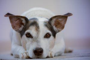 Czy zbierasz odchody po swoim psie?