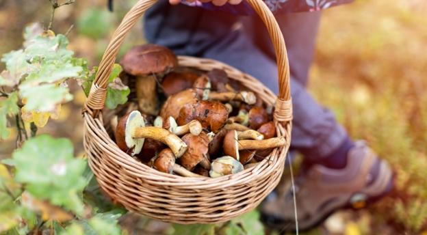 Czy wiesz jak zbierać grzyby? Tylko prawdziwym pasjonatom udaje się zebrać w tym QUIZie 15 punktów!