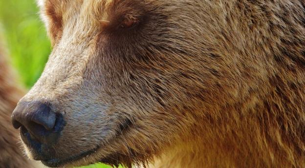 Ryś, miś i spółka. Co wiesz o dzikich zwierzętach żyjących w Polsce? QUIZ