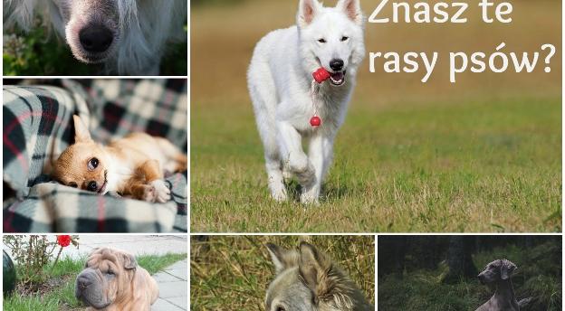 Znasz się na psach? Sprawdź, czy rozpoznasz te rasy? [quiz]