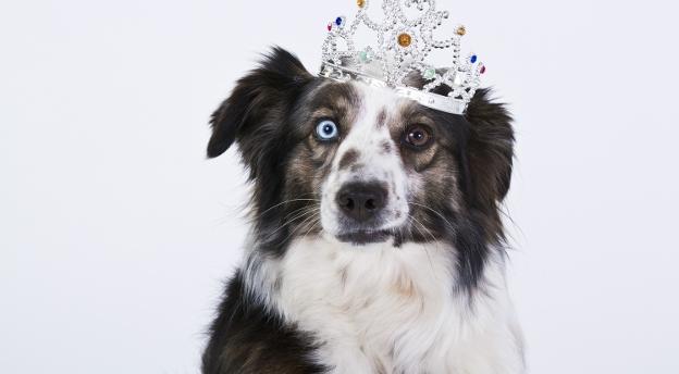 Jaki pies jest najodpowiedniejszy dla ciebie i twojej rodziny? QUIZ