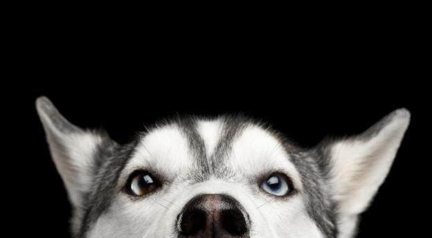 Jesteś głośną chihuahuą czy owczarkiem policyjnym? Sprawdź, jakim psem jesteś! QUIZ